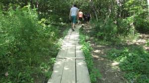 Follow a healthy path