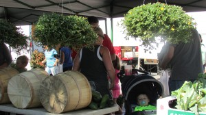 Everyone enjoys going to the farmers markets. It is great to support your local farmers