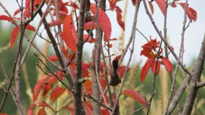 Looking closely at signs of fall